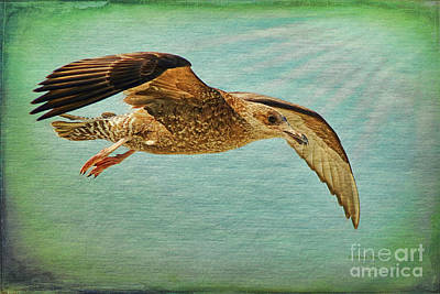 Flying Seagull Painting - Soar With Me by Deborah Benoit