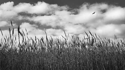 Hawk Photograph - Soaring Bw by Bill Wakeley