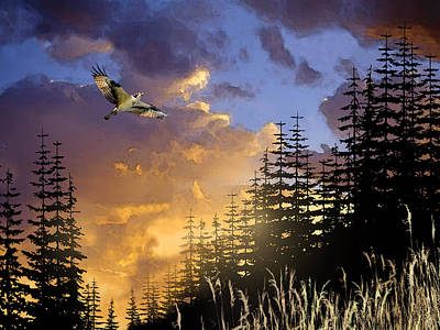 Osprey Painting - Soaring Raptor by Paul Sachtleben