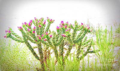 Soft Bloom Print by Jon Burch Photography