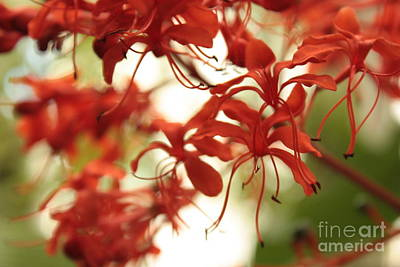 With Red Photograph - Soft Colors Natural Canvas by Carol Groenen