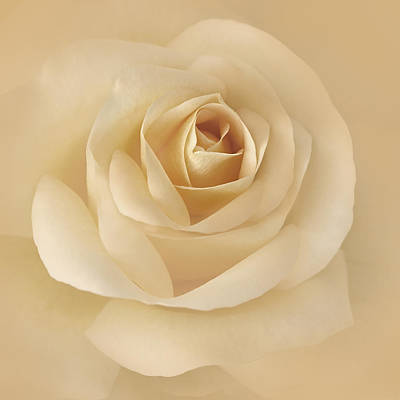 Rose Portrait Photograph - Soft Golden Rose Flower by Jennie Marie Schell