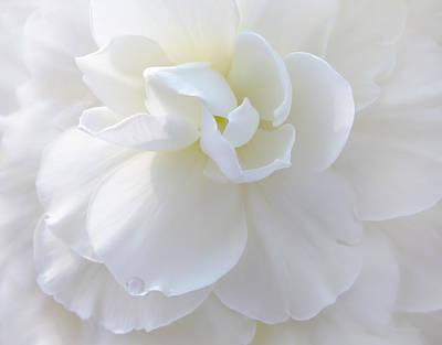 Soft Ivory Begonia Flower Print by Jennie Marie Schell
