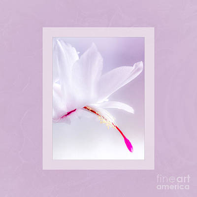 Holiday Cacti Photograph - Soft Jewels by Mona Stut