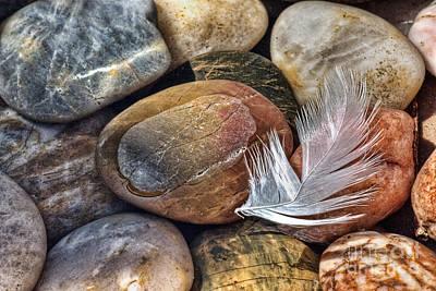 Swans Photograph - Soft Landing by John Edwards