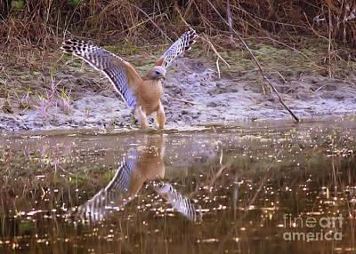 Soft Landing On The Pond Print by Carol Groenen