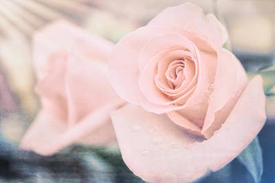 Floral Photograph - Soft Pastel Rose by Lilia D