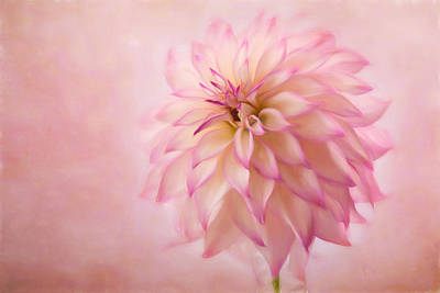 Computer Art Photograph - Soft Pink Glow by Mary Jo Allen