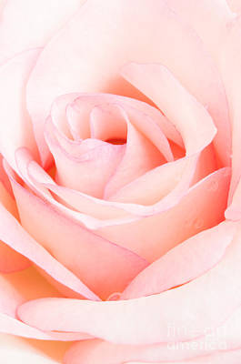 Photograph - Soft Pink by Greg Summers