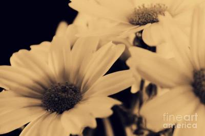 Spring Flowers Photograph - Soft Shapes by Clare Bevan