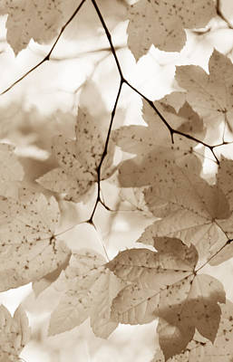 Softness Of Brown Maple Leaves Print by Jennie Marie Schell