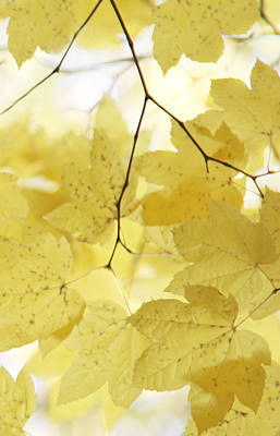 Softness Of Yellow Leaves Print by Jennie Marie Schell