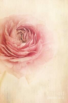 Rose Photograph - Sogno Romantico by Priska Wettstein