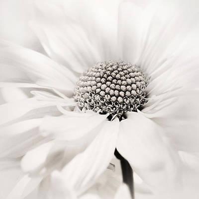 Photograph - Soiree In Black N White by Darlene Kwiatkowski