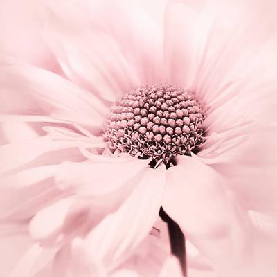 Photograph - Soiree In Cotton Candy Pink by Darlene Kwiatkowski