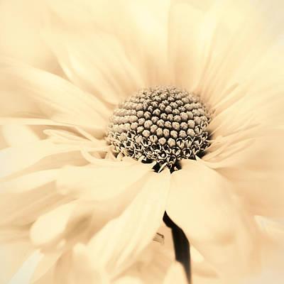 Photograph - Soiree In Creamy Yellow by Darlene Kwiatkowski