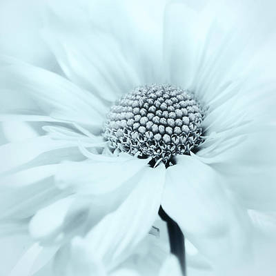 Photograph - Soiree In Powder Blue by Darlene Kwiatkowski