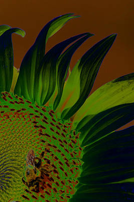 Photograph - Solar Sunflower by Carolyn Stagger Cokley