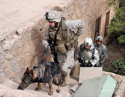 Working Dogs Photograph - Soldiers Move To The Roof Of A Metal by Stocktrek Images