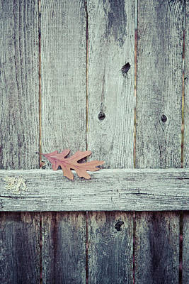 Charming Cottage Photograph - Solitary Leaf On Fence by Erin Cadigan