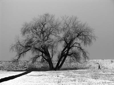 Winter Photograph - Solitude by Marilyn Hunt
