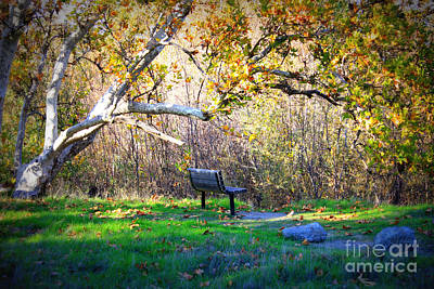 Benches Photograph - Solitude Under The Sycamore by Carol Groenen