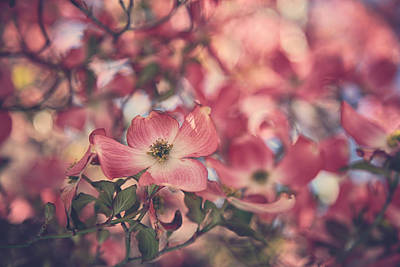 Dogwood Photograph - Some Souls Just Shine by Laurie Search