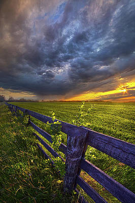 Flowers On Line Photograph - Sometime Between Then And Now by Phil Koch