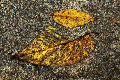 Of Autumn Photograph - Sometimes The Piece Does Not Fit by Karol Livote