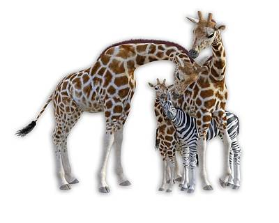 Zebra Digital Art - Sometimes You Have To Find The Right Spot To Fit In by Betsy Knapp