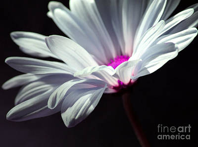 White Daisy Photograph - Somewhere In Time by Krissy Katsimbras