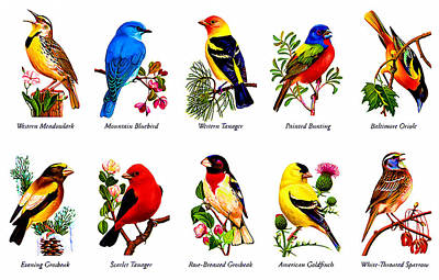 Meadowlark Painting - Songbirds by Lanjee Chee