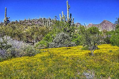 Desert Photograph - Sonoran Spring 3 by Roger Passman