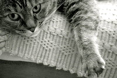 Catnap Photograph - Sophie by Erica Laucella