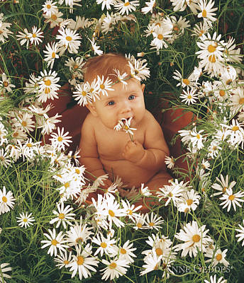 Spring Photograph - Sophie In Daisy Pot by Anne Geddes