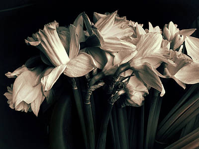 Daffodils Digital Art - Sorrowful by Jessica Jenney