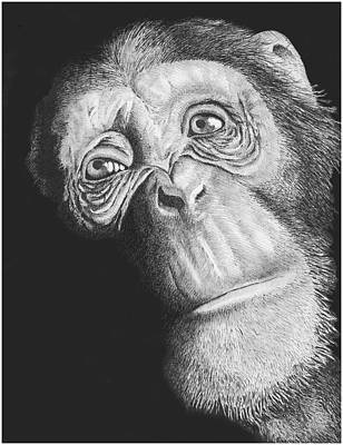 Chimpanzee Drawing - Soulful In Ink by Lawrence Tripoli
