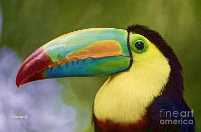 Toucan Mixed Media - South American Toucan Closeup  by Garland Johnson