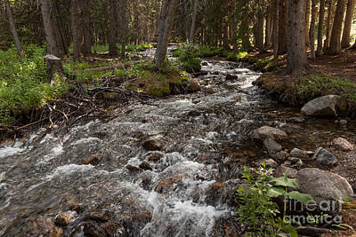 Yellow Photograph - South Boulder River by Carolyn Brown