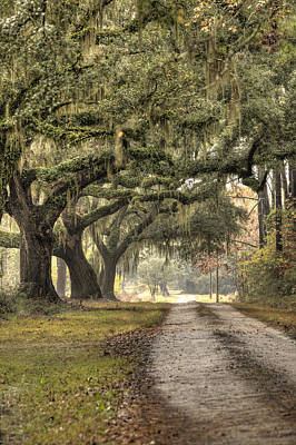 Moss Photograph - Southern Drive Live Oaks And Spanish Moss by Dustin K Ryan