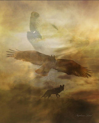 Red Tail Hawk Photograph - Southwestern Dream by Stephanie Laird