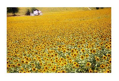 Spanish Landscape Photograph - Spanish Sunflowers by Mal Bray