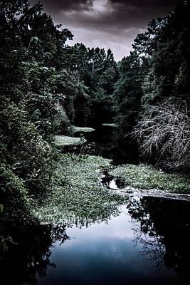 Bald Cypress Stump Photograph - Sparkleberry Swamp South Carolina by Alicia Collins
