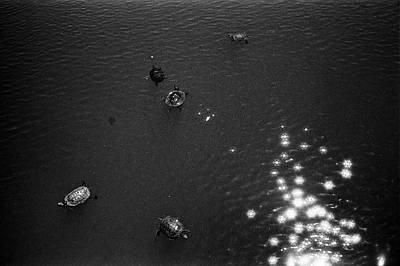 Central Park Photograph - Sparkling Turtle Pond by Dave Beckerman