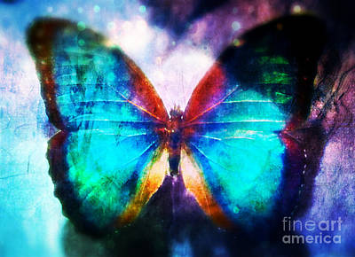 Butterfly Photograph - Sparkly by Anne Roy