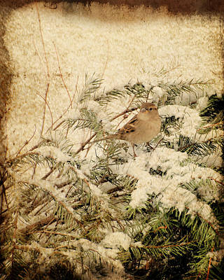Sparrow Digital Art - Sparrow In Winter I - Textured by Angie Tirado