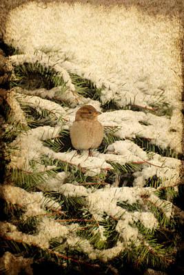 Sparrow Digital Art - Sparrow In Winter II - Textured by Angie Tirado