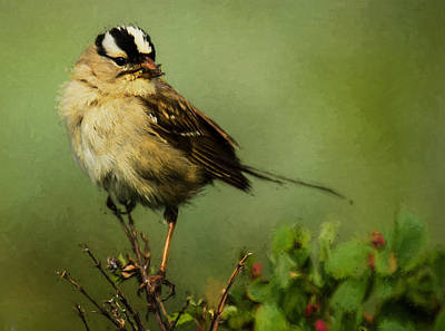 Photograph - Sparrow With Dinner by Patty MacInnis