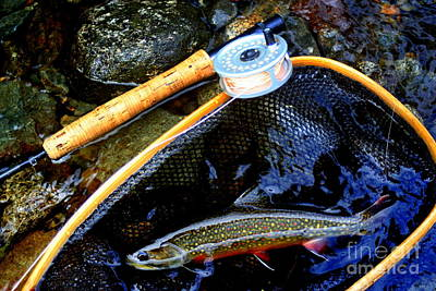 Wild Trout Photograph - Speckled Trout by John Kenealy