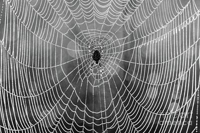 British Garden Orb Spider Photograph - Spider Web 2 by Marcin Rogozinski